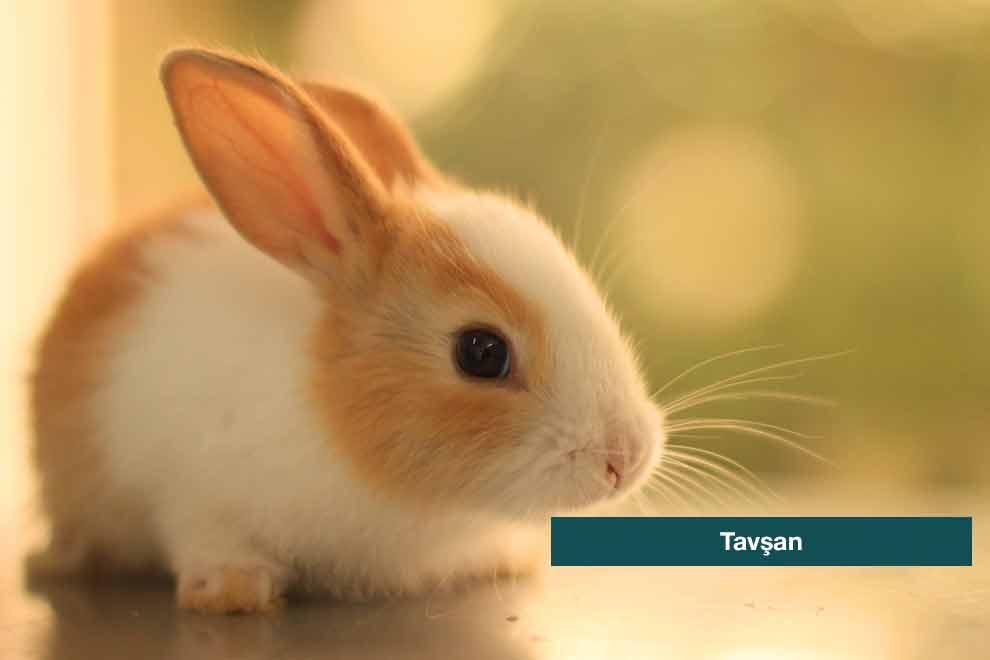 cin-astrolojisine-gore-seyahat-tarziniz-5-kanguru-haber-com-990x660