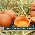 yumurta kabugu kalsiyum deposu kanguru haber com 990x660 150x150 - Yumurta Kabuğu Kalsiyum Deposu